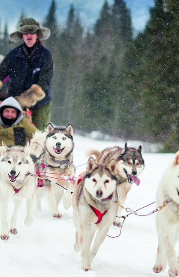 Étincelle - Activité traîneau à chiens - Au Chalet en Bois Rond